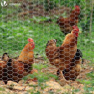 Choisir grillage à poules