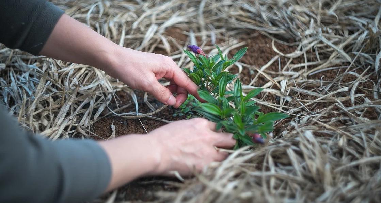 Pourquoi faire appel à un professeur de jardinage à domicile